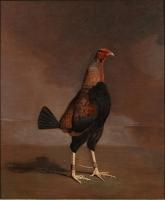 Ben Marshall 1768-1835