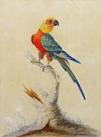 Sarah Stone c.1760-1844